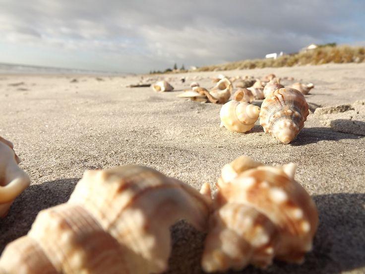 Shells along Mt Maunganui beach NZ
