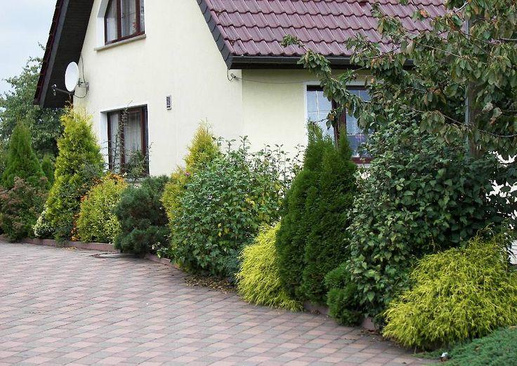 http://www.derkleinegarten.de/images/phocagallery/Blumen-und-Pflanzen/Koniferen/07-gelbe-koniferen-als-farbkontrast-in-einem-stadtgarten.jpg