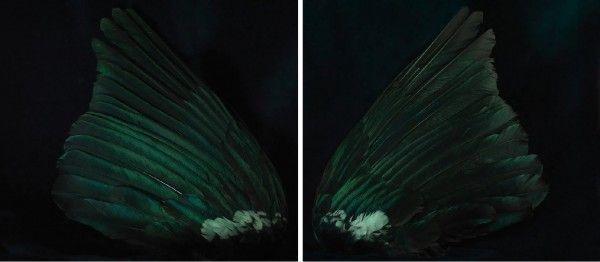 Fiona Pardington | Two Rooms