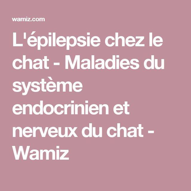 L'épilepsie chez le chat - Maladies du système endocrinien et nerveux du chat - Wamiz