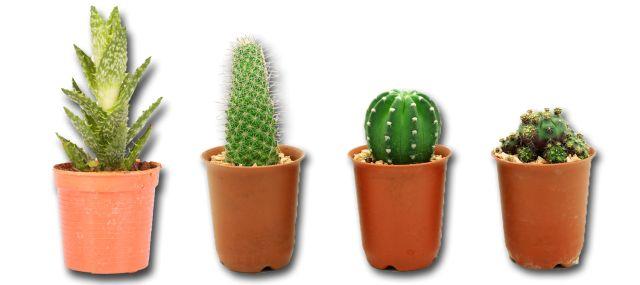 Las plantas han sido incluidas desde hace mucho tiempo en la decoración de espacios en el hogar, la oficina, los negocios, entre otros, por su belleza.