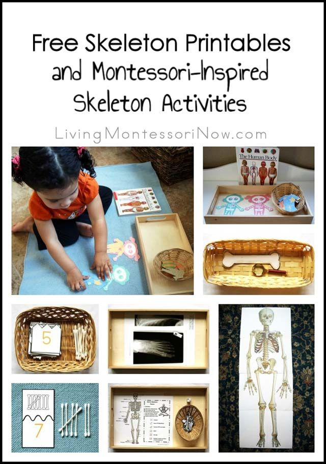Free skeleton printables and Montessori-inspired skeleton activities to help any age of child learn about the bones of the body; printables and activities for classroom or home; activities for Halloween or a skeleton unit at any time of year