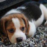 #dogalize Cura del cane cucciolo: consigli e alimentazione #dogs #cats #pets