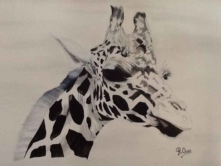 """""""Tilley """" 60cm x 75cm Acrylic on canvas ready to hang  SOLD  This beautiful giraffe is the first in my black and white series"""