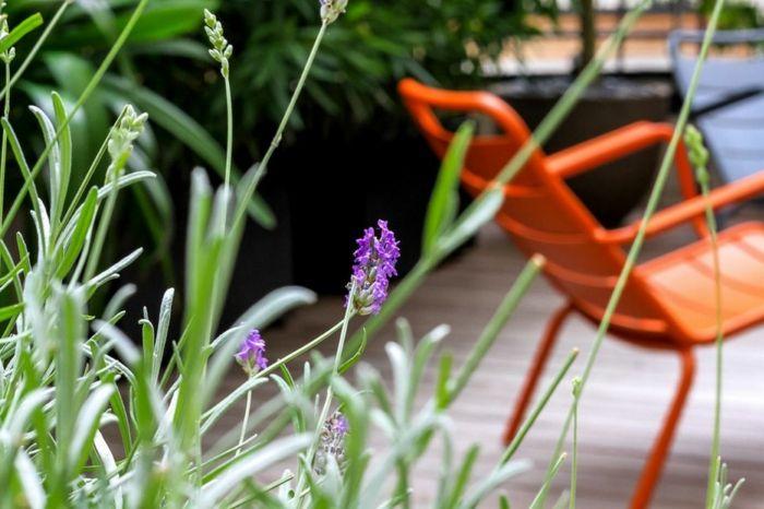 Lavender auf der Terrasse mit roter und blauer Stuhl, Terrasse bepflanzen