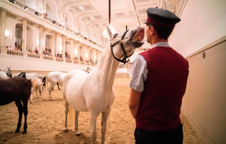 "http://ift.tt/2sS65pq""A horse interacts with a stud master during a program called 'Piber meets Vienna 2017' at the famous Spanish Horse Riding School at the Hofburg palace in Vienna Austria on July 5 2017."" Photo credit: Joe Klamar / AFP Photo"