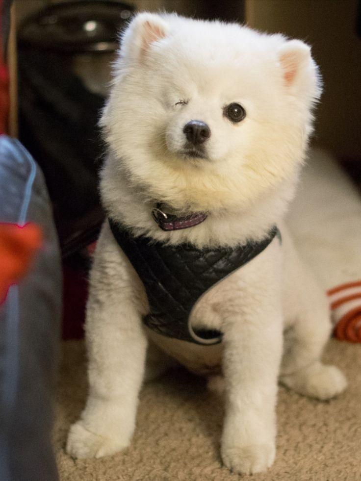 Adopt this floofy boy here! adoptapet adoptadog floof