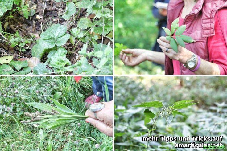Die Natur hat viel zu bieten. Willst du mehr über essbare Wildpflanzen wissen? Dann finde eine Wildkräuterwanderung in deiner Nähe und erlerne natürliche Ernährung neu!