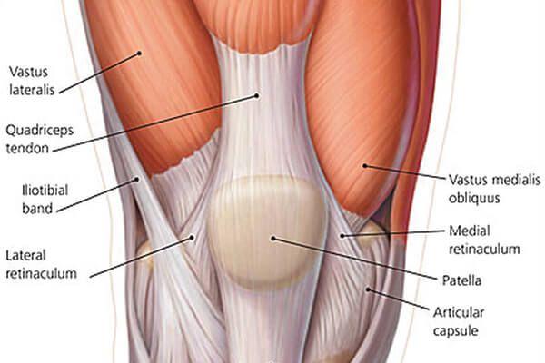 Resultado de imagen de musculos de la pierna