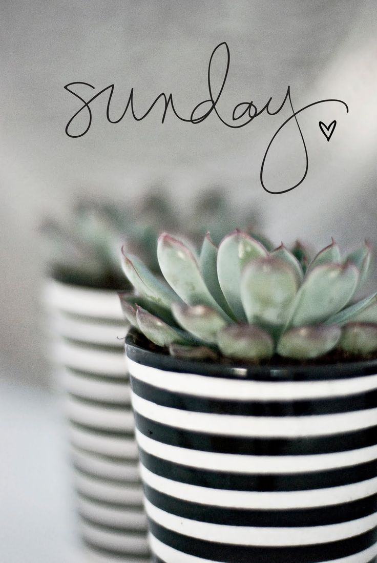 Sundays: A day of much needed rest from the chaos of life.