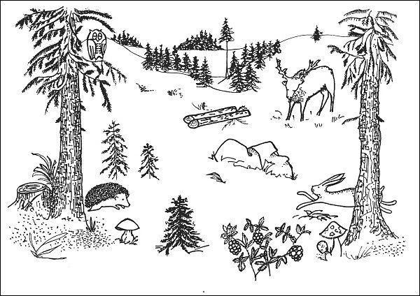 Situační obrázky - V lese