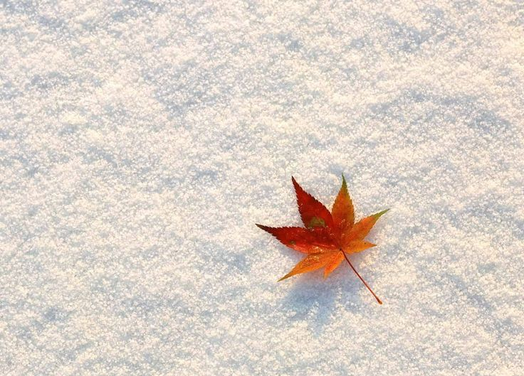 fall wallpapers cute | HD Wallpapers