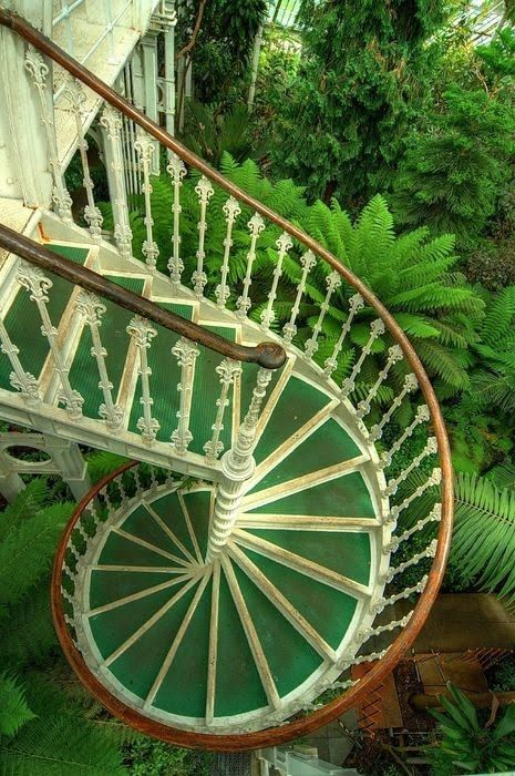 green spiral staircase descending into a forest of lush green ferns. I want these stairs on my home!