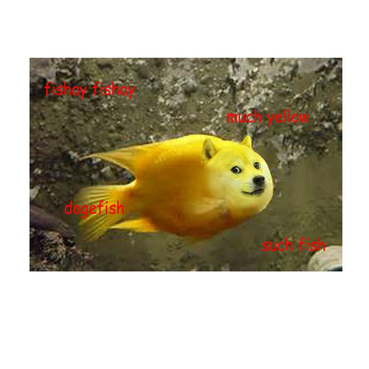 much fish such yellow watur | Self-made Doge memes ...