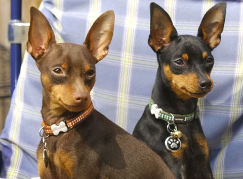 chocolate min pin - Google Search