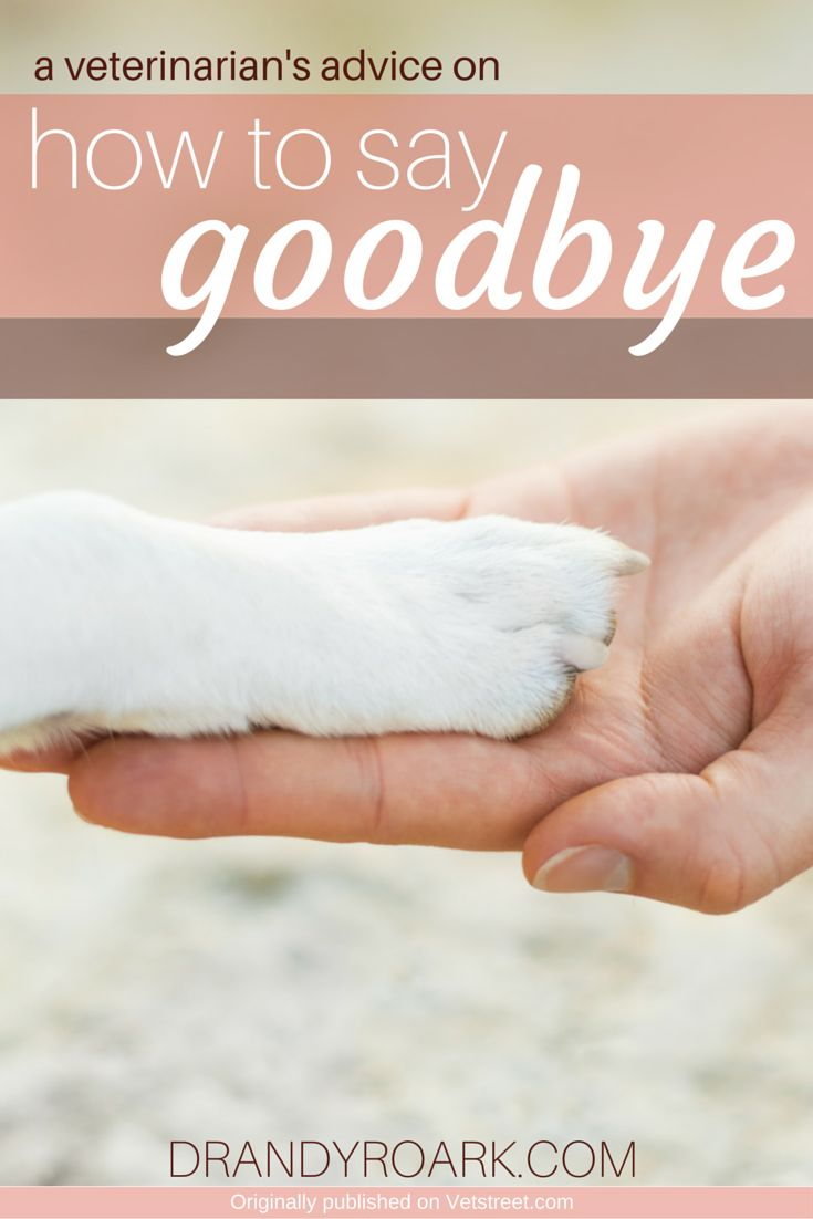 Veterinarian, Dr. Andy Roark, offers insight on how to say goodbye to a pet. Perfect for anyone dealing with the loss of dog, cat or other beloved pet.