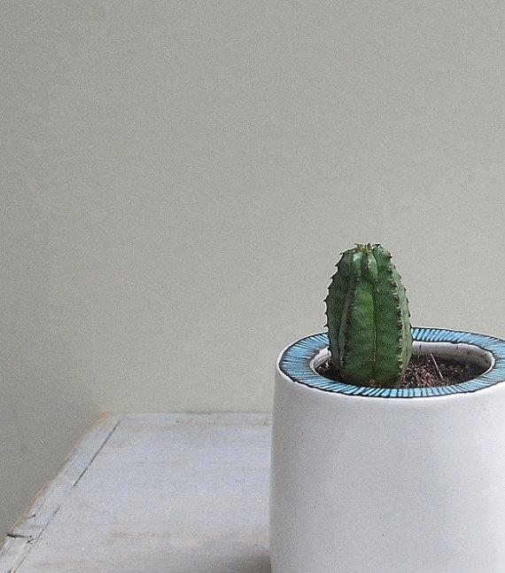 Cactus Dans Un Pot à Rebord Bleu Rayé