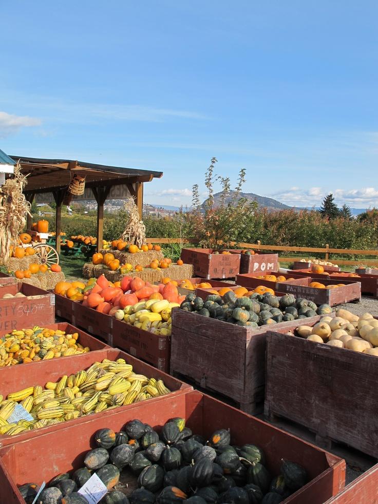 Harvest time at Paynter's Market!