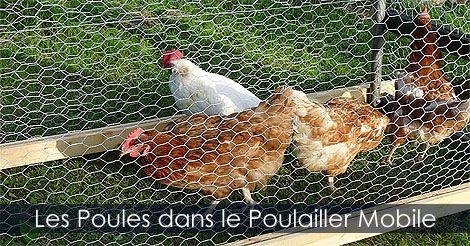 Poulailler - Construire un poulailler que l'on peut déplacer - Fabrication d'un poulailler mobile ou tracteur à poules. Instructions: http://www.jardinage-quebec.com/guide/construire-un-poulailler-mobile/poulailler-sur-roues-7.html