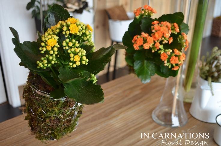 #hanging, #plants. #InCarnationsDesign.  www.incarnationsdesign.com