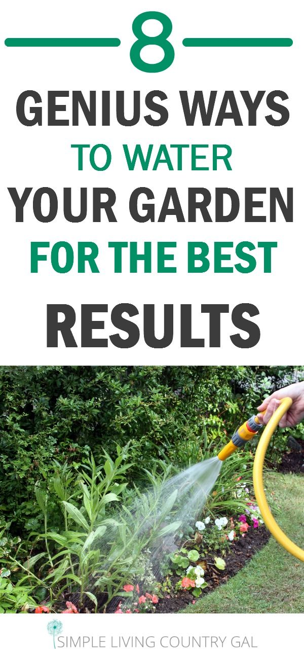 Vegetable Garden Advice Part - 36: Learning The Best Time To Water Your Garden And How To Do It Will Be A