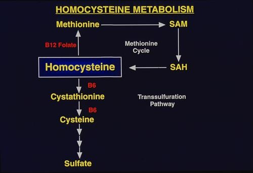 The researchers concluded that lowering homocysteine concentrations in the blood significantly reduces the risk of ischemic heart disease, stroke, and even deep vein thrombosis, a serious clotting condition not directly related to atherosclerosis. In addition, they found that homocysteine levels and risk for cardiovascular disease was increased in people with a gene mutation that reduces the activity of methylenetetrahydrofolate reductase (MTHFR), an enzyme involved in folate metabolism.