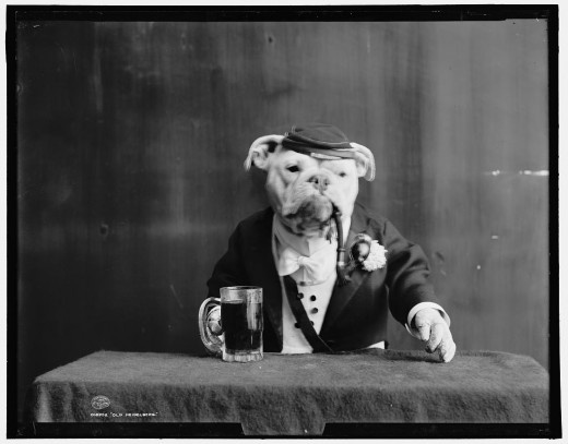 These photographs of bulldogs in fancy dress were unearthed from 1905 .. don't ask!