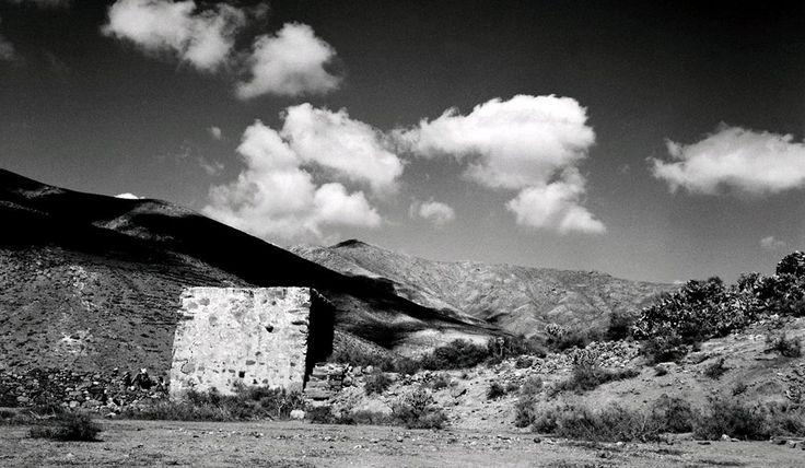 Birdsong Albert Serra