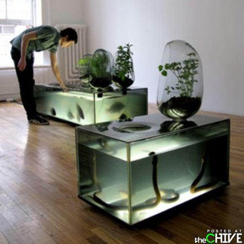 Awesome Aquariums Sans The Snakes.