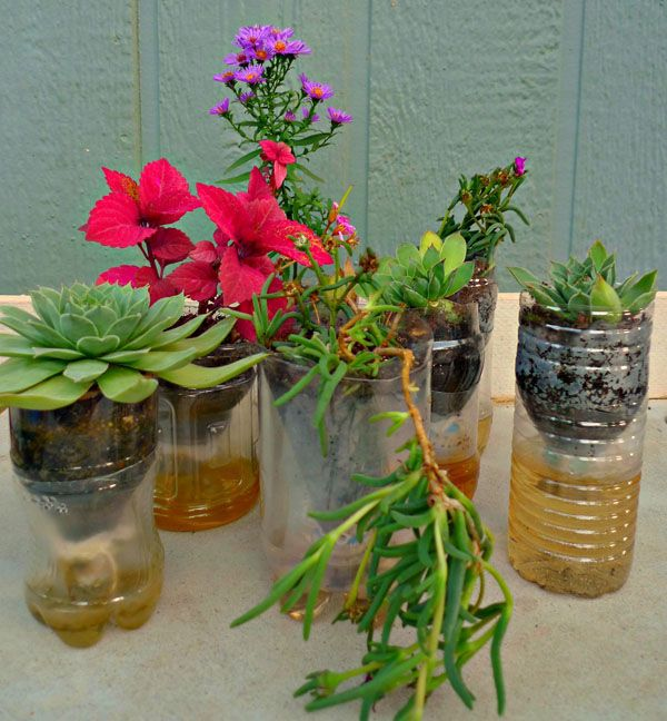 DIY self watering containers for small houseplants or cuttings.