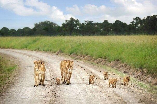 Если хочешь идти быстро - иди один. Если хочешь идти далеко - идите вместе.