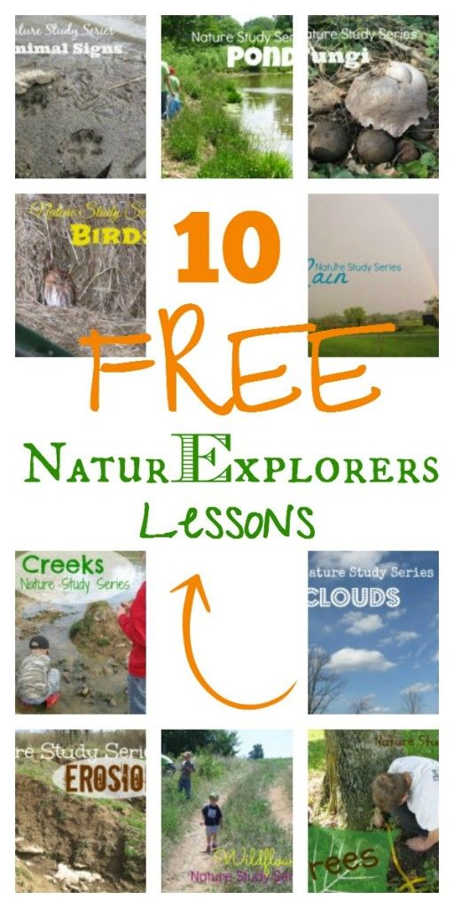 Nature Exploring lesson ideas