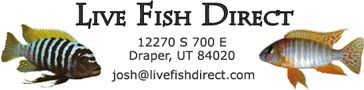 "Live Fish Direct: ships live fish. ""Welcome to Live Fish Direct where you have the unique opportunity to buy Live African Cichlids and other Freshwater Tropical Aquarium Fish direct from the source, where retailers across the United States order from. We are experienced aquarium fish breeders with a main focus on African Cichlids, particularly Lake Malawi Cichlids. We have expanded to the breeding of all types of Cichlids including Victorian and Tanganyikan Cichlids."""