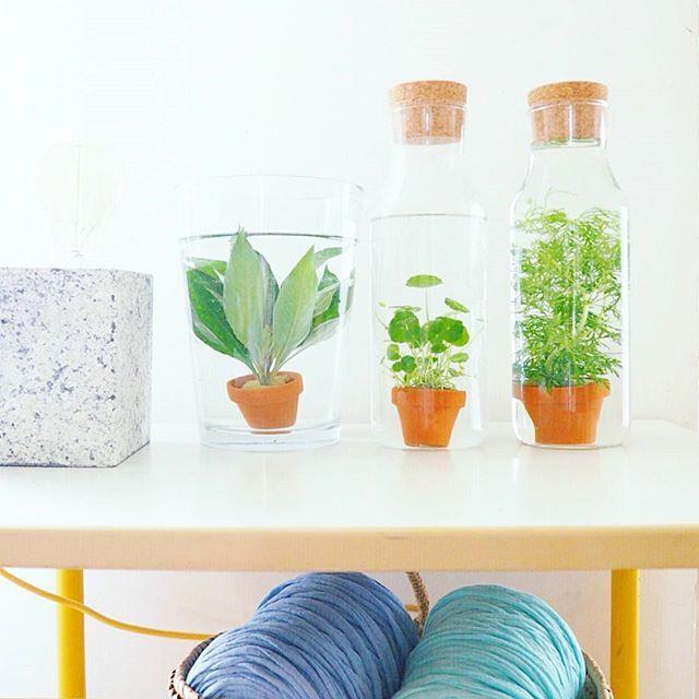 Les Gambettes Sauvages : plantes aquatiques green gardenin aquarium deco design