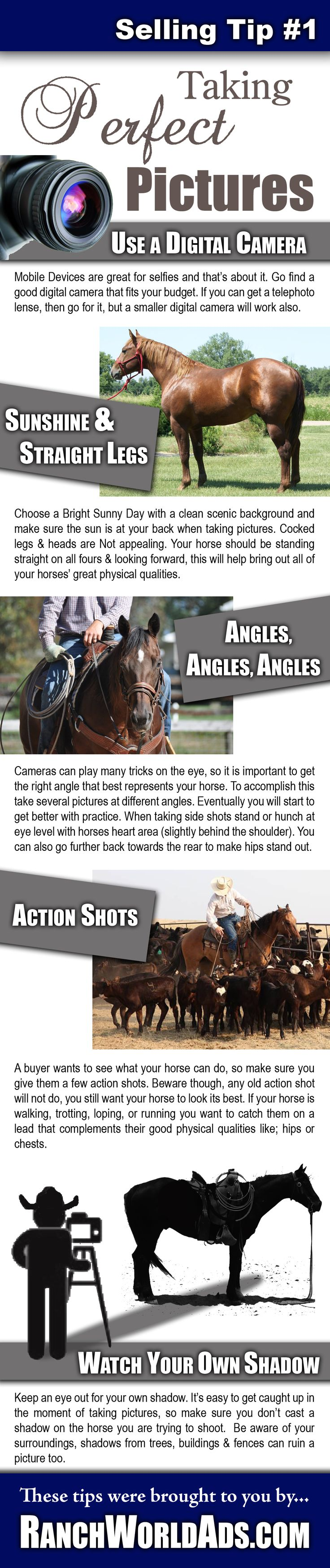 Tip # 1 for Selling Horses Online - Taking Perfect Pictures
