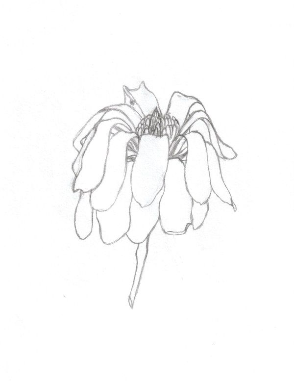 Wilting Flower Drawing Google Search Flower Drawing