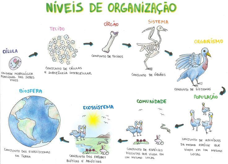 Mapa Mental: Níveis de Organização em Biologia