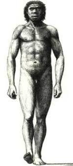 El primer descubrimiento de los australopitecos se produjo en Africa del Sur. La mayoría de los yacimientos proceden de Africa del Sur, principalmente Sterkfontein y Makapansgat, encontrándose restos de probables africanus en el Omo y Koobi Fora. Por lo general, en Africa del Sur los restos se encuentran en yacimientos en cueva, o procedentes de cuevas posteriormente desmanteladas