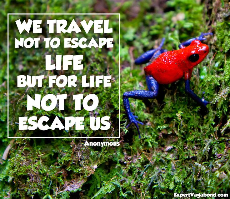 If you can't travel experience life in your own backyard you'll be surprised what you find.