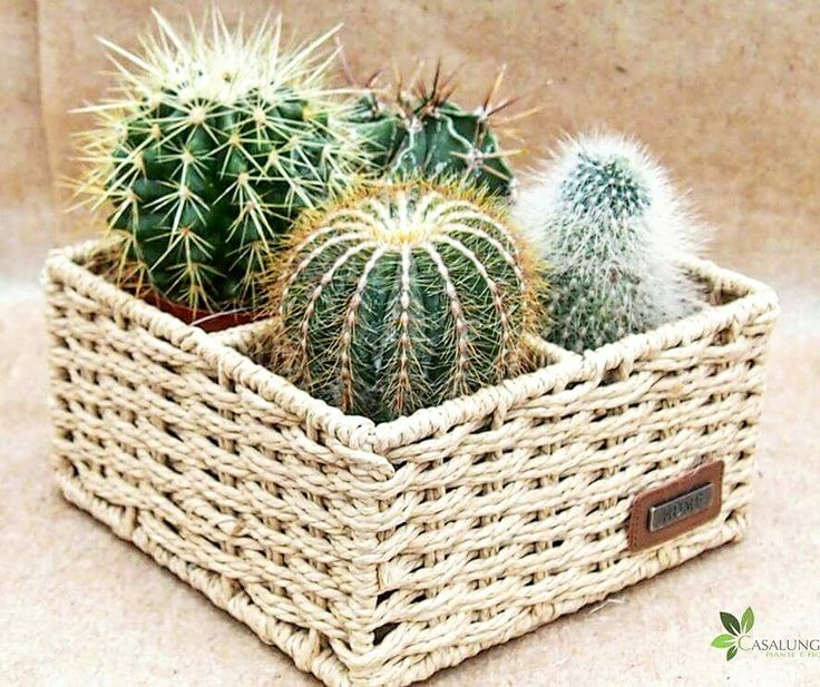 Cestino di piante grasse disponibile on line