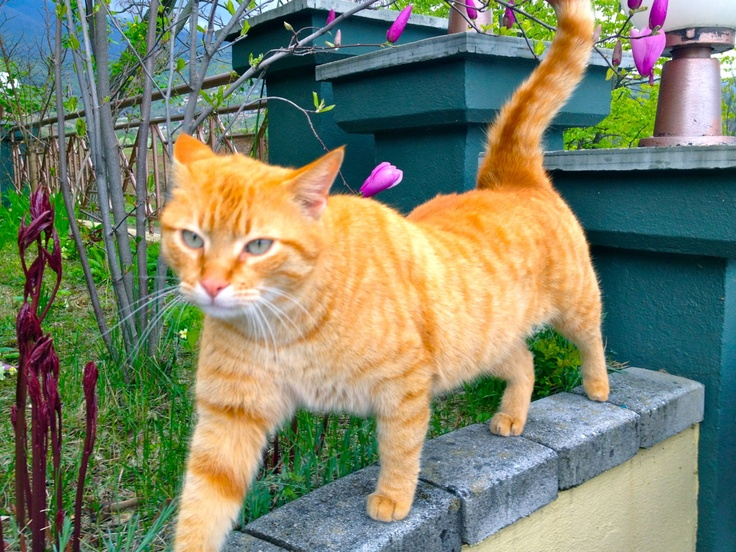 My cute little cat, Zak! Love him so much!