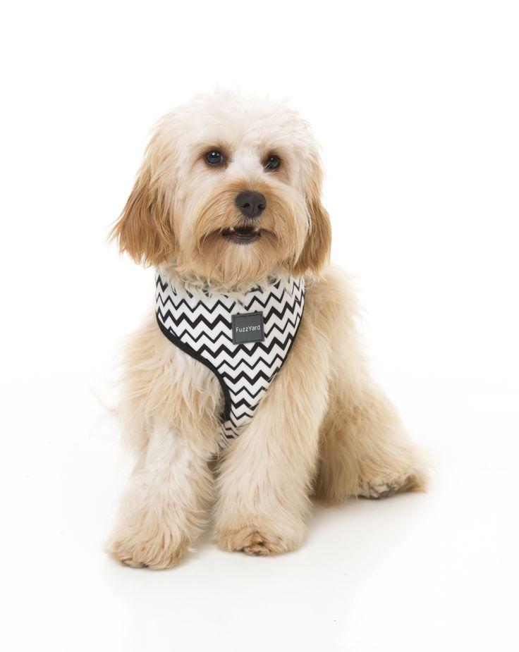 FuzzYard OkOk Dog Harness