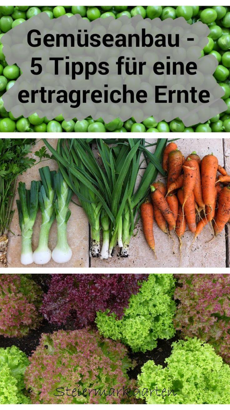 Tipps für eine ertragreiche Gemüseernte...