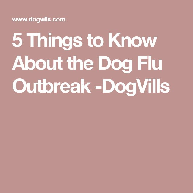 5 Things to Know About the Dog Flu Outbreak -DogVills