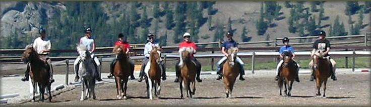 Icelandic Horse Farm, Vernon, Canada <3 Canadian Bred Horse Icelandic Horses For Sale