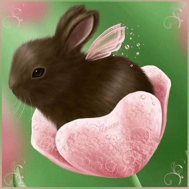 также движущиеся картинки с кроликами приложении