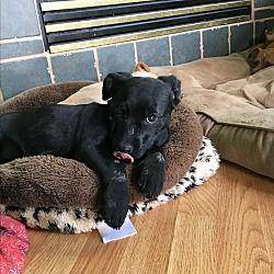 denver, Colorado - Corgi. Meet Rudolph, a for adoption. https://www.adoptapet.com/pet/20585125-denver-colorado-corgi-mix