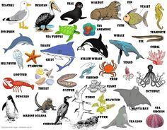 Learning the English vocabulary for sea animals English lesson,  #animals #English #learning …