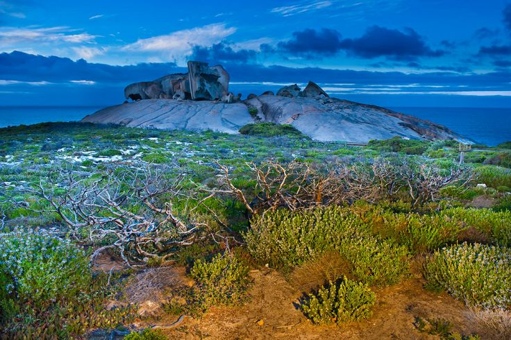 Isla de los Canguros (Australia)