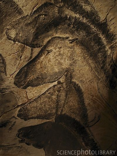 Stone age cave painting of horses from Chauvet, France. The paintings there are the oldest known, carbon-dated to approximately 33,000 years ago, almost twice the age of the Lascaux cave paintings. The dates have been a matter of dispute but a study published in 2012 supports placing the art in the Aurignacian period, approximately 30,000-32,000 BP.